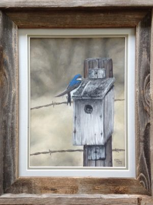 Swallow on birdhouse