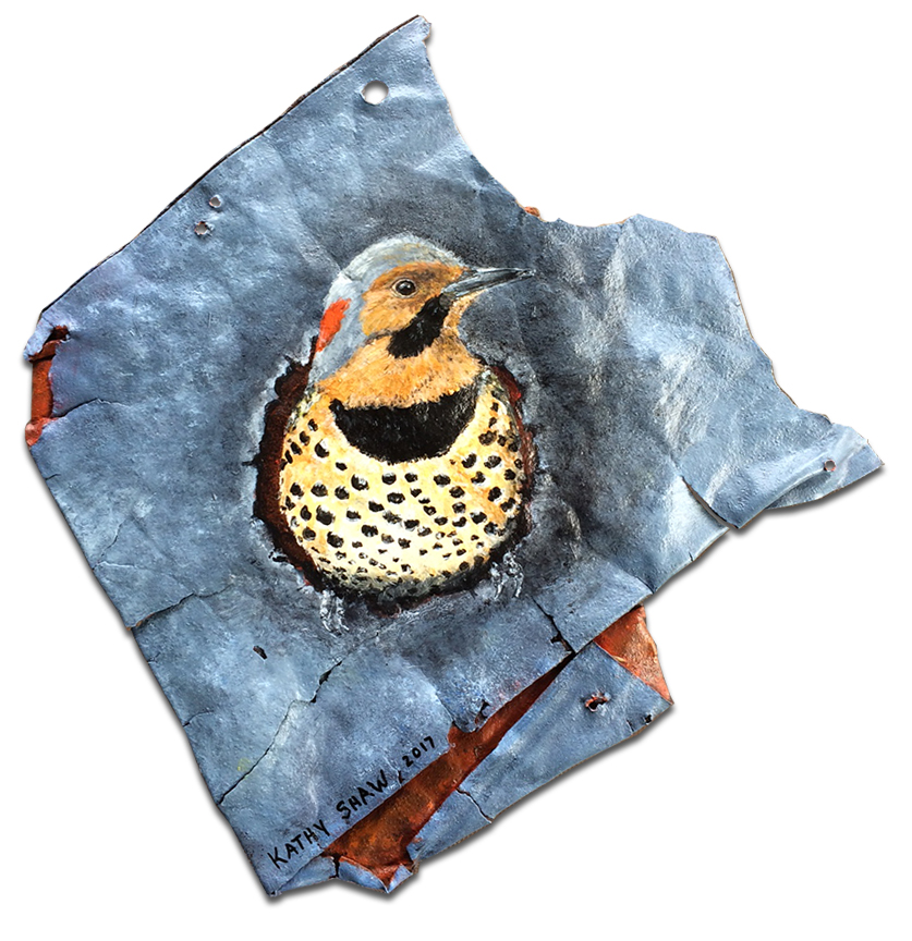 Northern Flicker on rusted metal