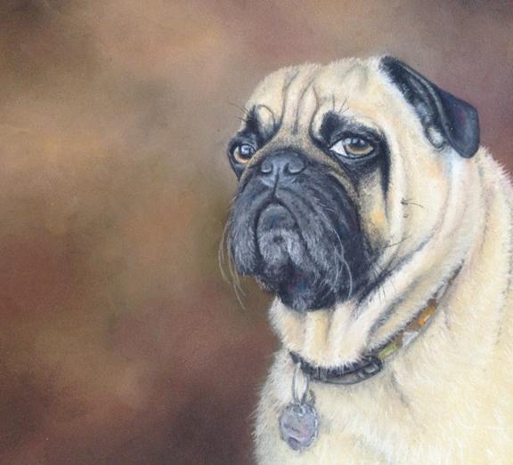 Pug Portrait - Pastel