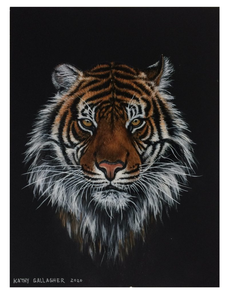 """Tiger in Acrylic on Black Paper - 9"""" x 12"""""""