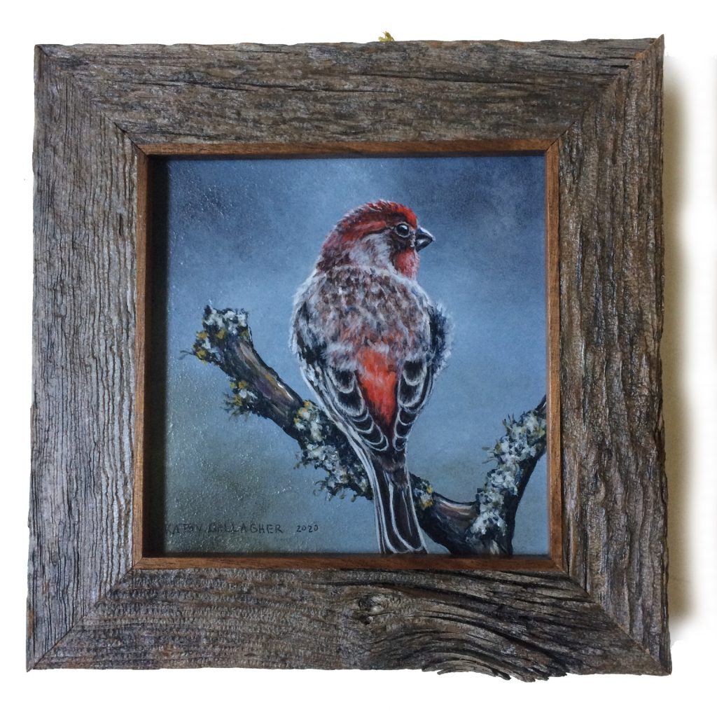"""House Finch on panel in barn wood frame - 6"""" x 6"""""""